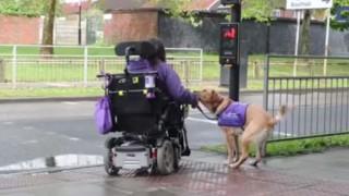 Ela é deficiente e precisa de ajuda, o que seu cachorro faz por ela é incrível
