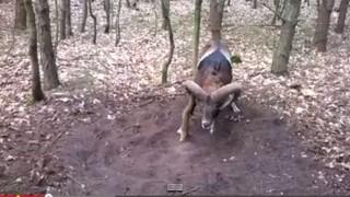 Esse animal selvagem está em apuros, mas alguém aparece para o ajudar